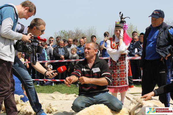 соревнования по стрижке овец