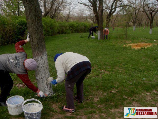 Педагоги и учащиеся школ Арцизчины высадили в районе более 180 деревьев и 50 кустов