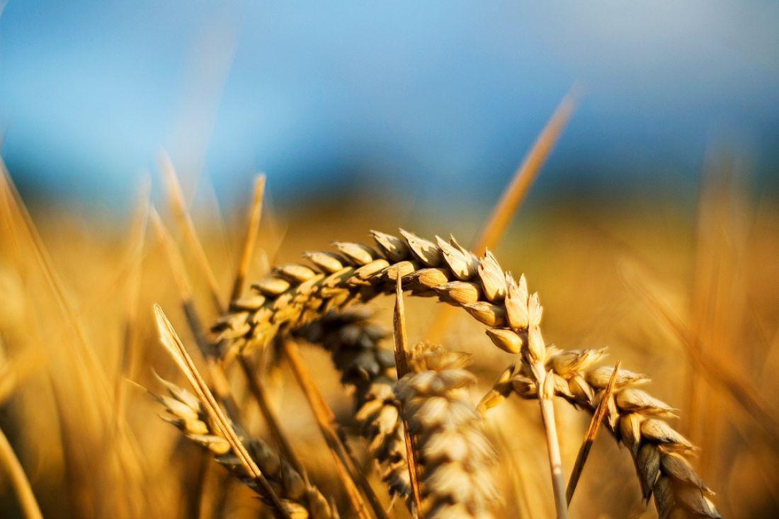аграрии Килийского района