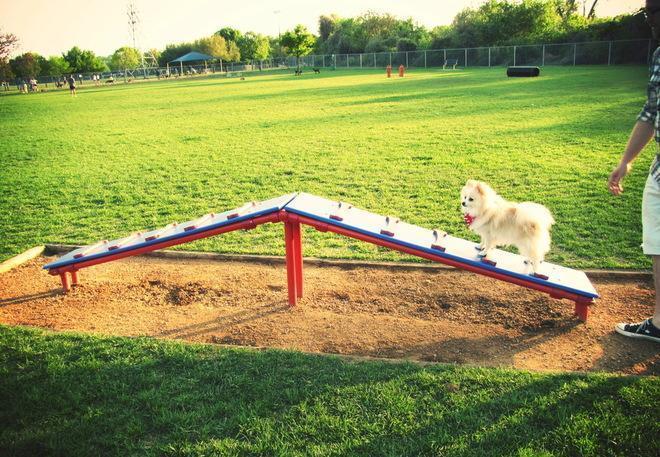место для выгула собак