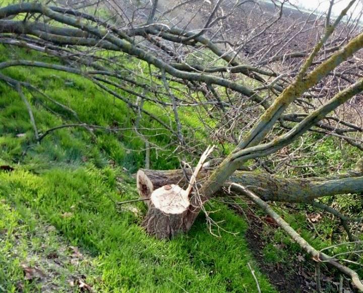 вырубка лесополос
