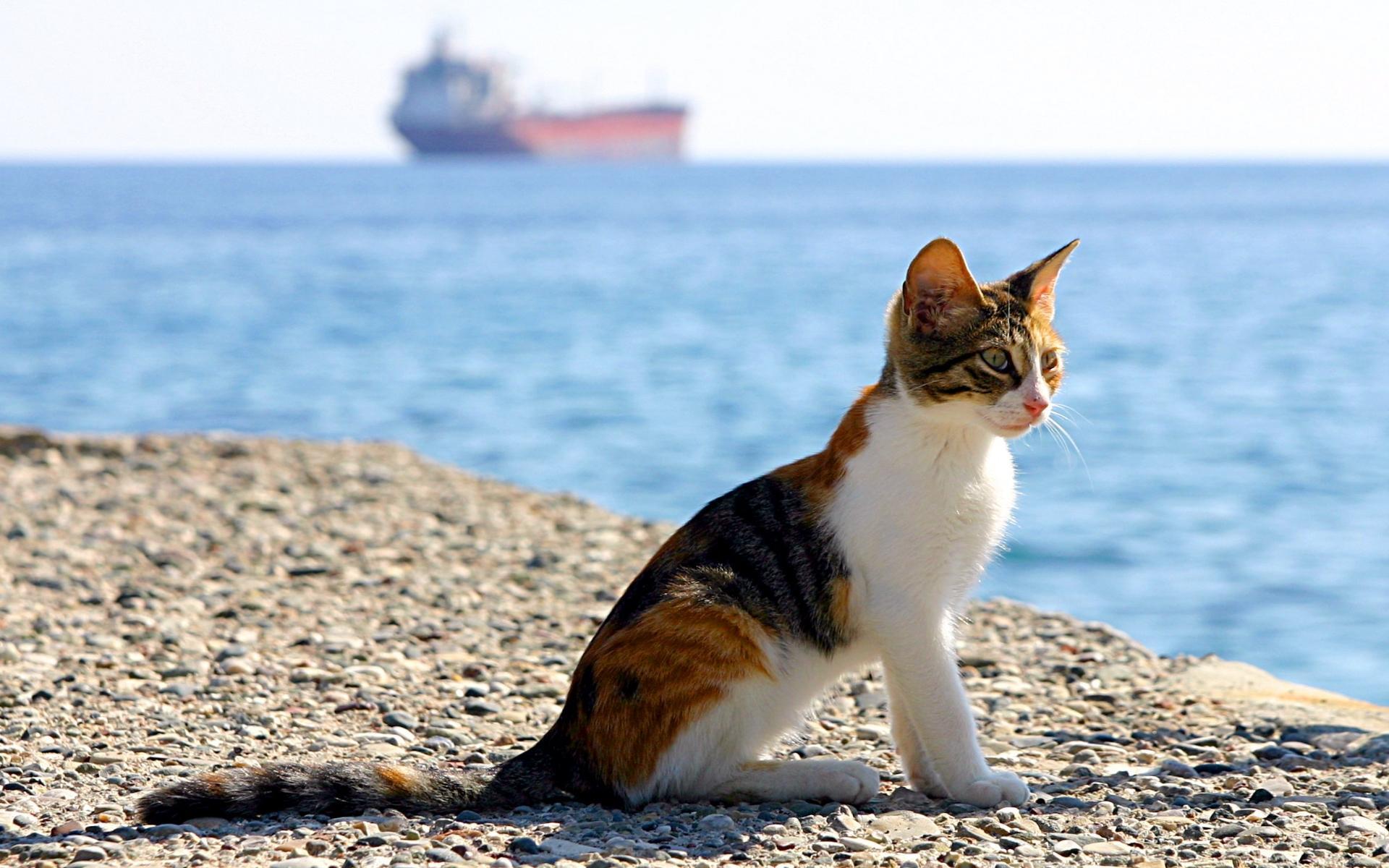 воспитании девочек картинки котята в море выполнен арендаторами