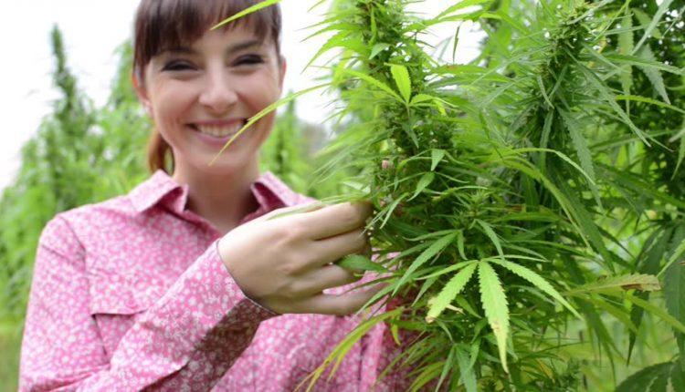 Наказанья за выращиванья конопли сталин и марихуана