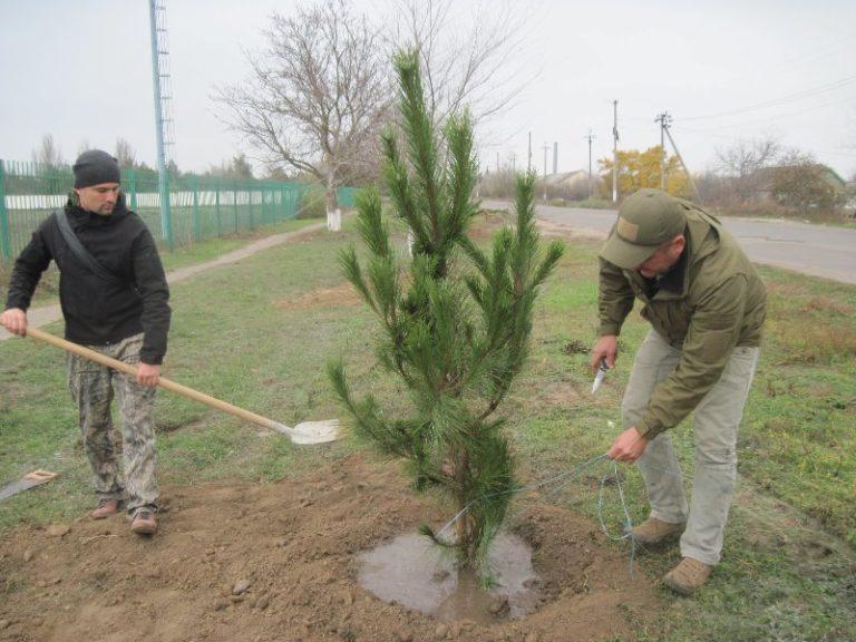 садить деревья