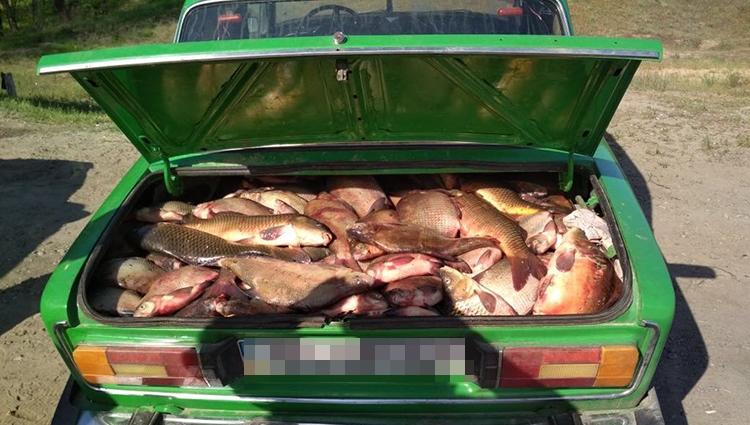 улов в багажнике