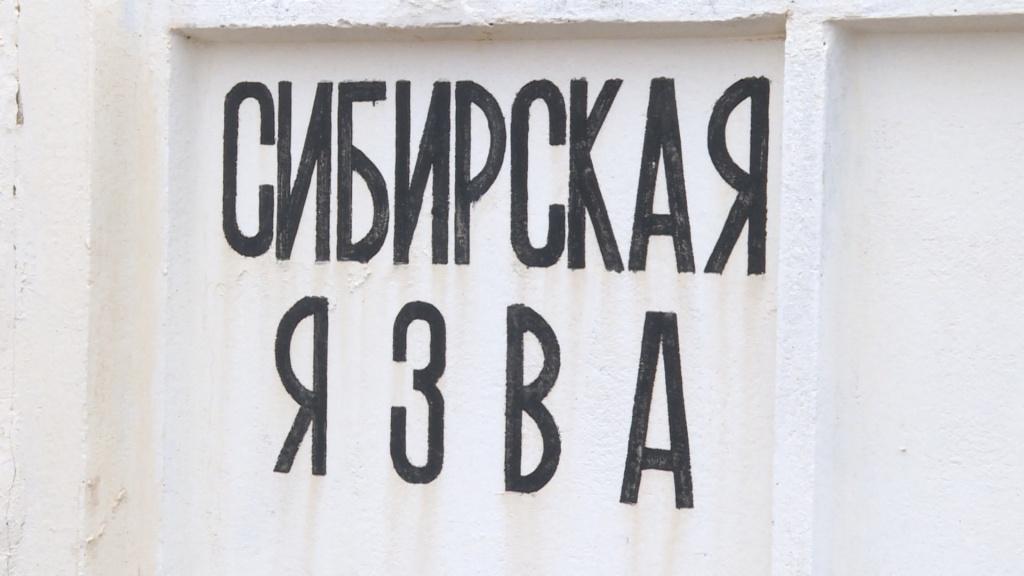 сибирская язва, сарата