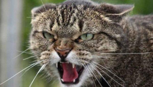 Подтверждён случай бешенства домашнего животного в Одесской области