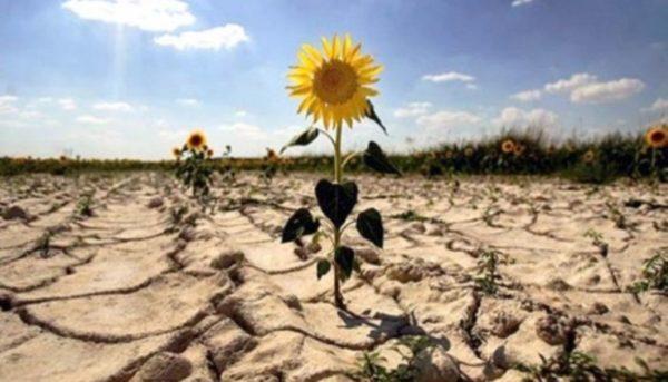В этом году югу Украины, в частности Бессарабии, снова угрожает засуха
