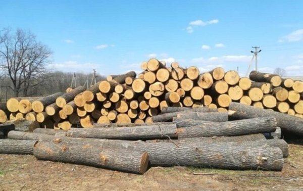 В Одесской области железнодорожники незаконно вырубали лес
