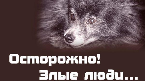 Обезглавливал и отрезал лапы: в Измаиле задержали подростка за жестокое обращение с животными