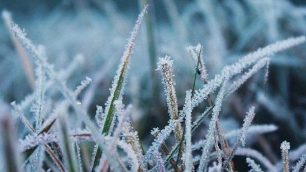 Одесская область ждет удара морозов