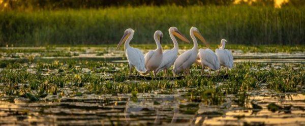 Природоохранники Дуная придумали как спасать краснокнижных птиц