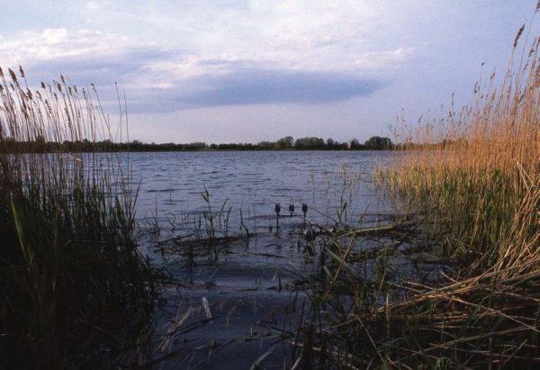 В Одесской области обнаружен труп в местном водоеме
