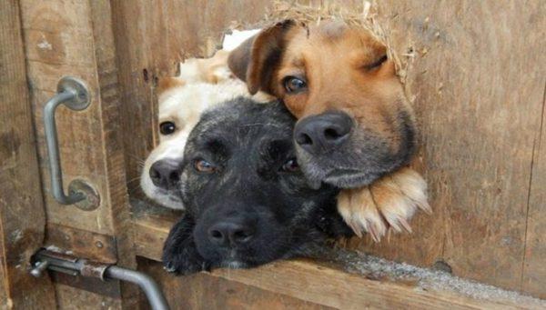 В Одесской области в частном хозяйстве, умирают от голода животные