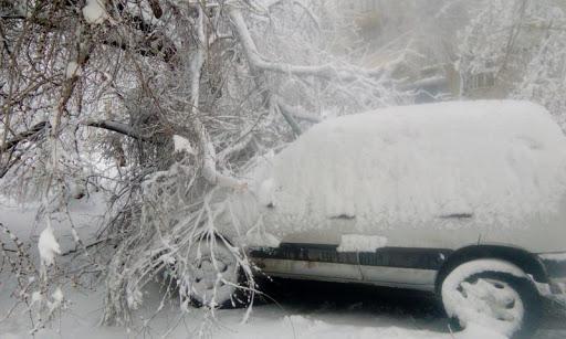 В Вилково рухнувший под снегом старый тополь едва не убил людей