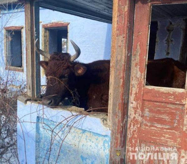 Жителя Одесской области оштрафовали за жестокое обращение с животными