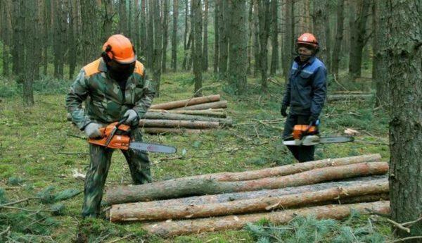 Пятеро сотрудников Одесской железной дороги предстанут перед судом за незаконную вырубку леса