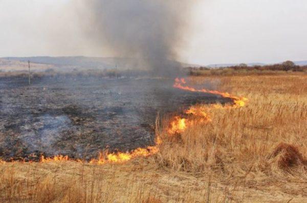 Рада подняла штрафы поджигателям экосистем