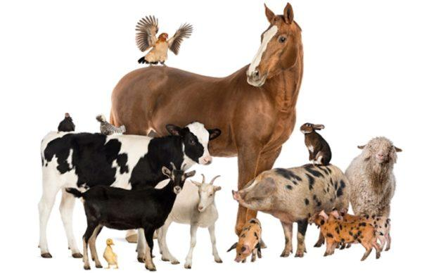 В Белгород-Днестровском районе уменьшилось поголовье скота и птицы