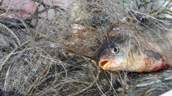На озере в Болградском районе пойманы браконьеров