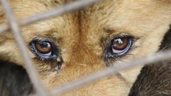 В Татарбунарах обнаружили ферму с насилием и издевательством над животными