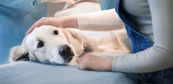 Измаильские коммунальщики перестанут травить бездомных собак: животных будут стерилизовать