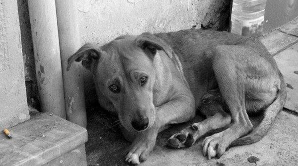 В Килии мужчина избил металлическим стулом привязанного на цепь сторожевого пса