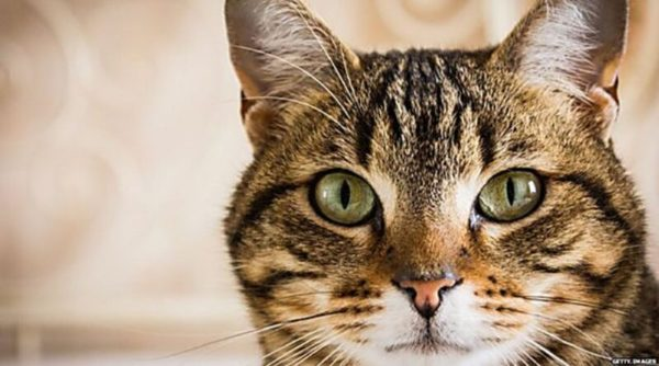 63-летнему измаильчанину предстоит ответить по закону за убийство соседской кошки