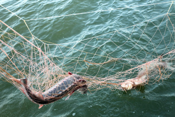 На озере Кагул пограничники Измаильского отряда задержали браконьеров
