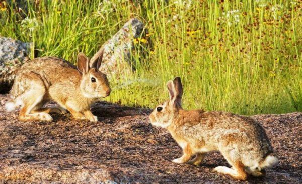 В Одесской области пересчитали диких животных: лесные коты, зайцы и кабаны стали коренными жителями Бессарабии