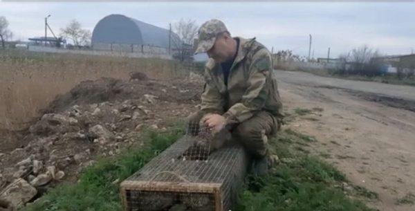 В селе Заря Одесской области выпустили на волю новый вид фазанов