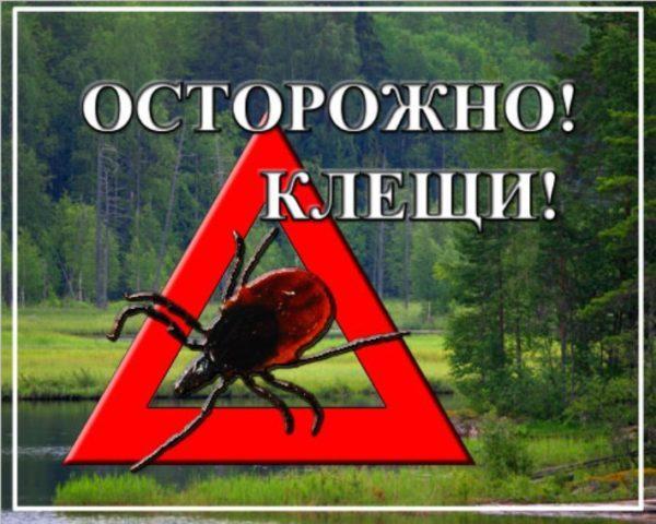 """""""Осторожно клещи!""""-в Одесской области начался сезон активности клещей"""