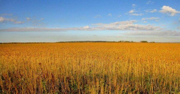 Аграрии прогнозируют рост озимых культур