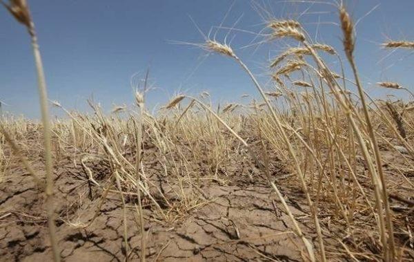 Одесская область: прошлогодний урожай зерновых оказался худшим за 8 лет