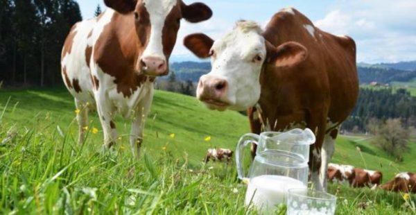 Арцизские фермеры могут получить компенсацию за приобретенные доильные аппараты