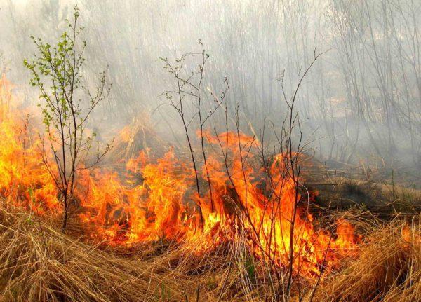 Спасатели предупредили о чрезвычайной пожарной опасности в Одесской области