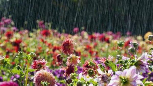 Жара будет чередоваться с дождями и бурями: синоптик дал прогноз на лето