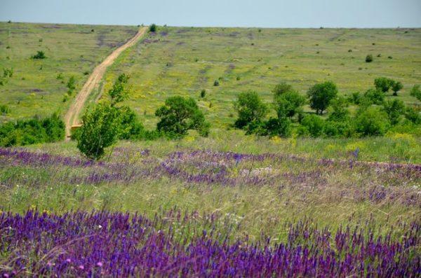 Тарутинская степь имеет шанс получить статус национального природного парка