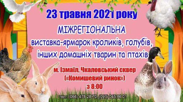 В Измаиле пройдет традиционная выставка-ярмарка кроликов и голубей