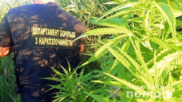 Под Одессой зоозащитники выявили плантацию марихуаны