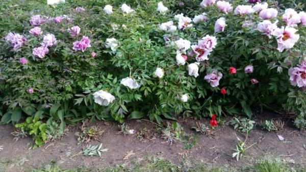 В Одесском ботаническом саду вытоптали и сломали уникальные растения
