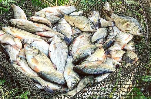 В Одесской области могут вырасти цены на речную рыбу