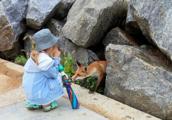 В Одесской области поселились лисы, которые охотно ладят с людьми
