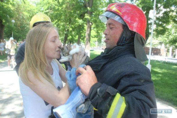 Пожарные Измаила выезжали для спасения котят
