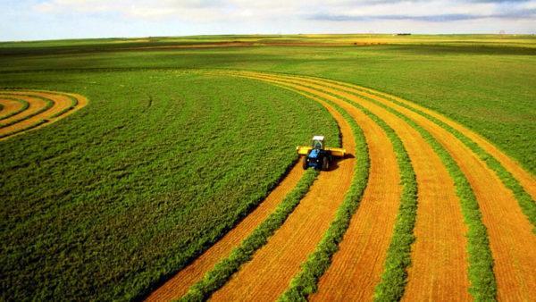 Стало известно сколько будет стоить земля в Украине с 1 июля