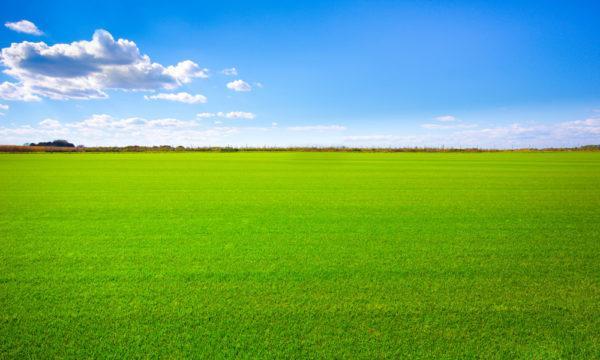 Обнародован список документов, необходимых для продажи земли