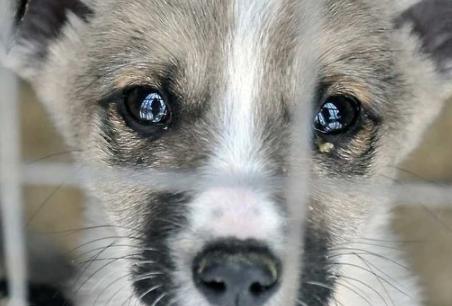 В Украине принят законопроект, в котором наказание за жестокое обращение с животными стало более строгим