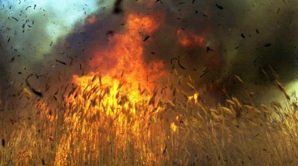 Спасатели Измаильского района призывают не провоцировать пожары в природных экосистемах