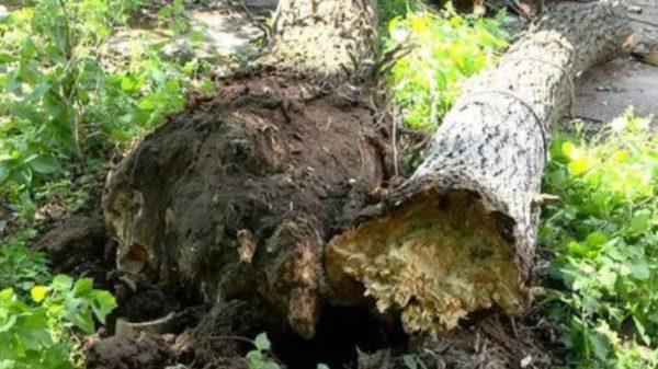 В результате непогоды, в частности падения деревьев и конструкций, в Украине погибли два человека