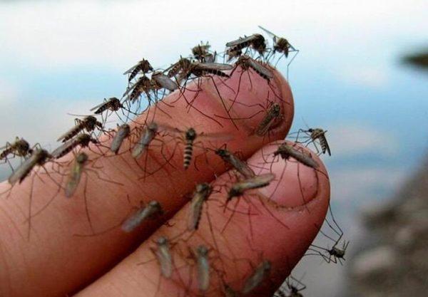 Украинцы массово страдают от нашествия комаров